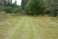 10 Acres Finks Mill Rd (Cr 4) Florala AL, 36442