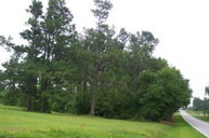 0 Lot 9, Block B, Hwy 176 Saint Matthews SC, 29135