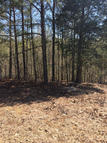 Lot 13  Wild Fern Creek Subdivision Iuka MS, 38852