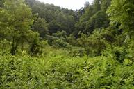 59.63 Ac Black Sheep Hollow Rd Sneedville TN, 37869