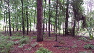 Lot 20 E. Cypress Dr. Donalsonville GA, 39845