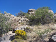 1.5 Acre Off La Mariposa Oracle AZ, 85623