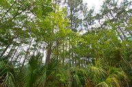 Lot #8 72nd Lane Cedar Key FL, 32625