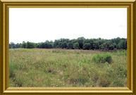 0-25acres Katie Lane Worthville KY, 41098